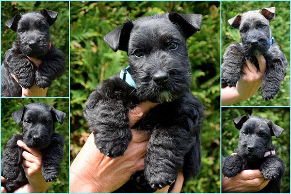 Pups Maud